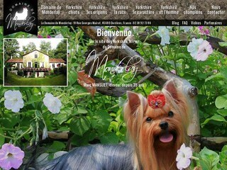 Elevage yorkshire toy, Elevage yorkshire nain, Elevage yorkshire terrier